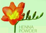 海娜花能染黑色是化学染发剂吗?